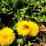 干拓地に咲いている花