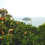 自然溢れる大芝島2