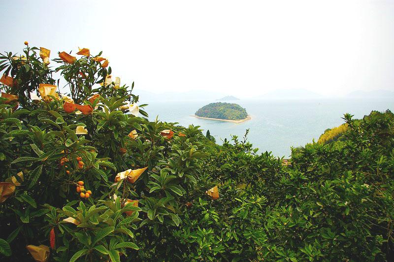 ビワとみかんと島のコピー