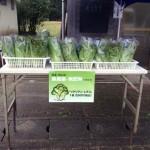 3日間の無農薬野菜販売スタート!